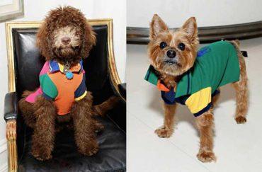 ralph lauren dog event photos