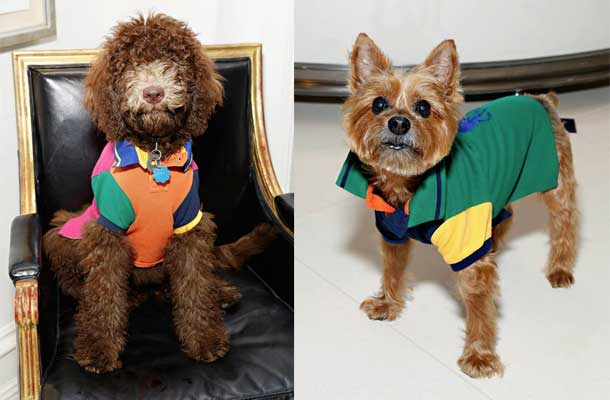 ralph lauren dog event photos