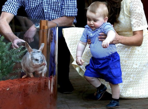 Prince George Wearing Rachel Riley Outfit at Australia Zoo